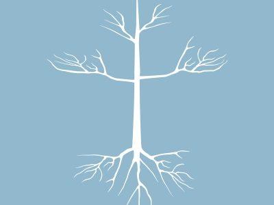 vine root